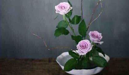 互动吧-静享花开