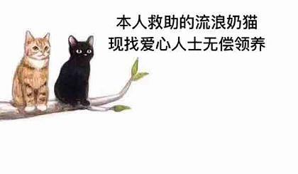 互动吧-这里有无偿流浪猫加预定自家生的小猫(各种品种)