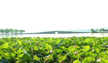 互动吧-杭州慢生活 | 西子湖边慢骑行,赏花赏竹赏湖光~