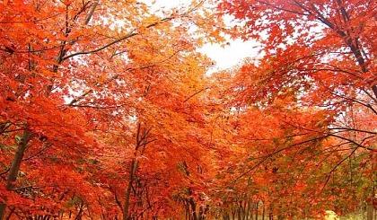 互动吧-特价399元 11.24-25 情迷南国最美枫叶林、行摄鬼斧神工飞天山