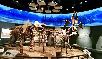 """互动吧-""""化石小猎人""""——科考主题研学营"""